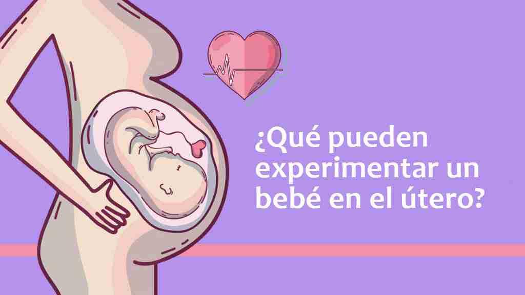 ¿Qué pueden experimentar un bebé en el útero?