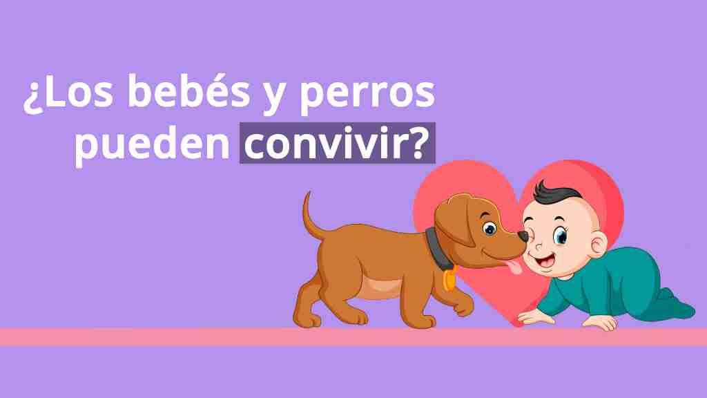 Lee más sobre el artículo ¿Los Bebés y Perros pueden convivir?